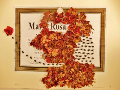 """""""Maria Rosa"""""""